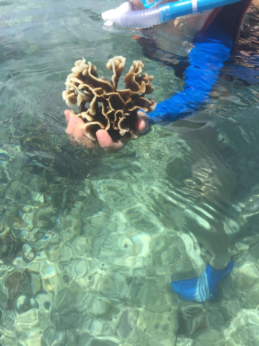 壁纸 海底 海底世界 海洋馆 水族馆 900_1200 竖版 竖屏 手机