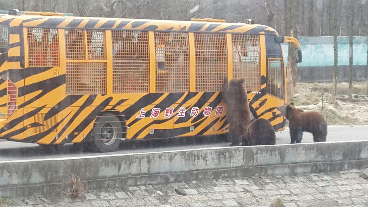 野生动物园游玩,正好赶在九点前在携程上买了四张成人票,驱车一个多