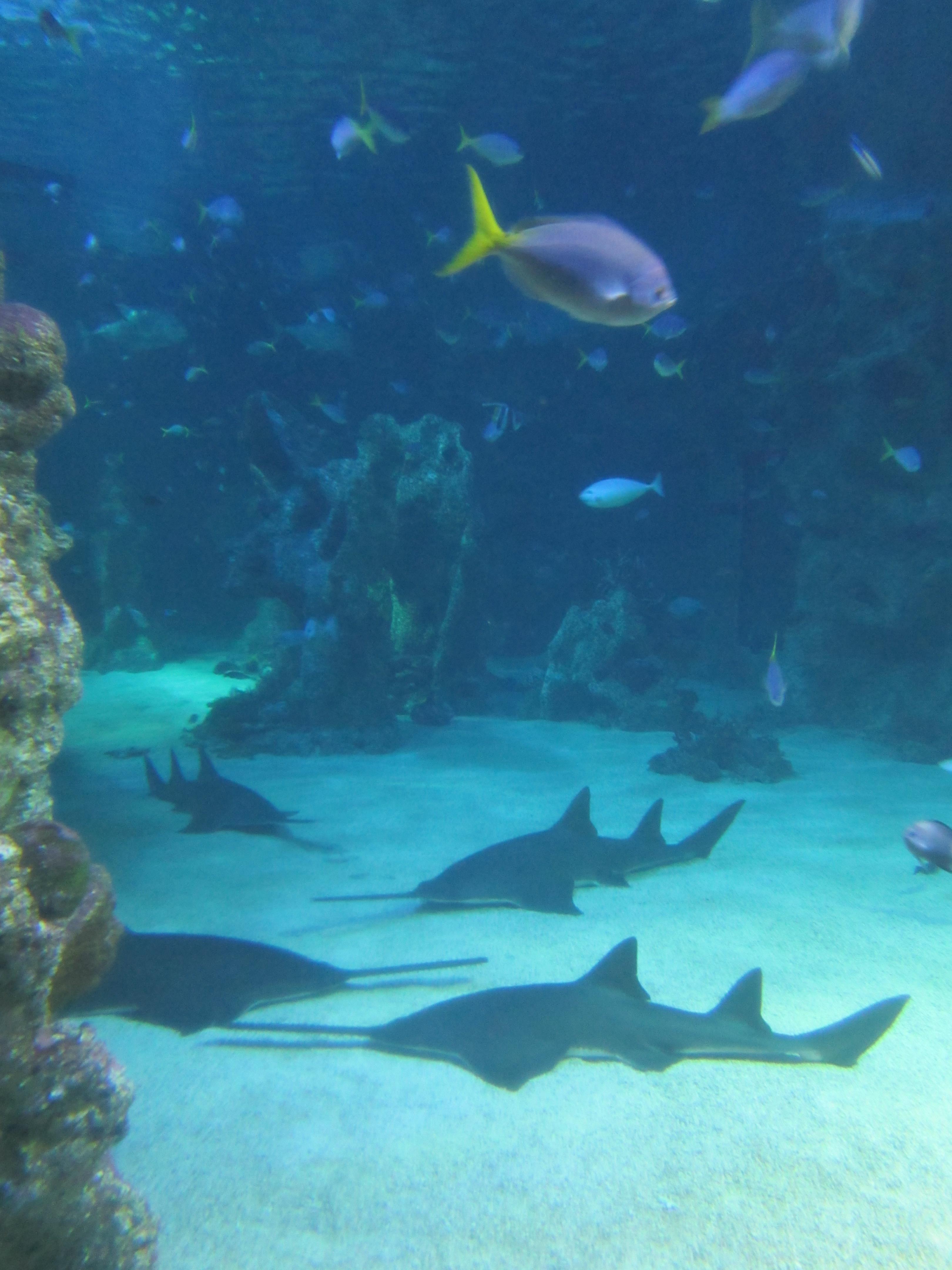 主体建筑在达令港水面下的悉尼水族馆,以长达146米的水底通道、全部圆弧形的玻璃观景窗,让游客尽情欣赏海底生态环境的千姿百态。这里汇集了澳洲5000多种水底生物,其中鲨鱼种类之多,世界排名第一、第二,此外,还有世界最大的鸭嘴兽。水族馆很不错,有很多种水底生物,还可以看到澳洲特有的水族生物。
