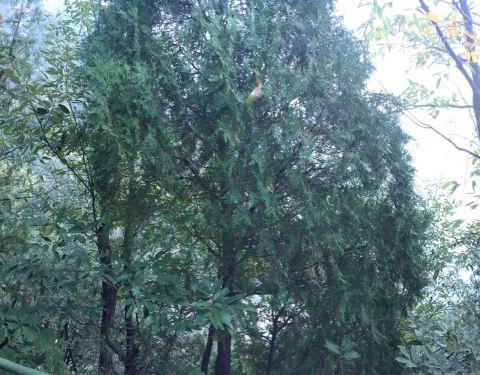2019红河谷森林公园门票,眉县红河谷森林公园石家庄到普陀山自驾游攻略图片