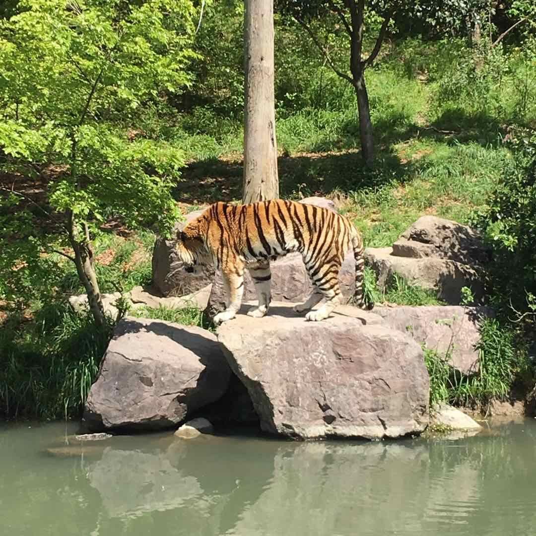 我去过的最烂的动物园,与其说动物园不如说4分之一的动物园加上4分之三的公园更合适,全程大半时间没动物,走的累死,景色还可以,毕竟公园的景色差不到哪去,动物品种少,杭州动物园30的门票动物都比这多,整个园区走勒一半就会让人产生后悔的想法。130的票价绝对连30都不值,里面东西还贵的要命,介意不要去。