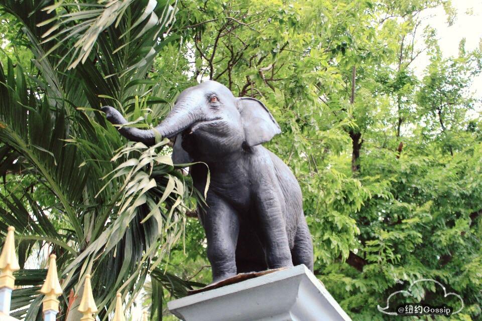 律实动物园dusit zoo