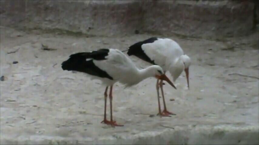 【携程攻略】开罗省开罗动物园景点,在开罗参观当地的
