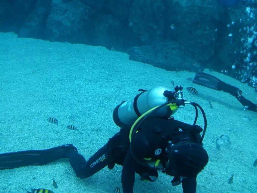 很美的海洋世界,看到了很多海底动物