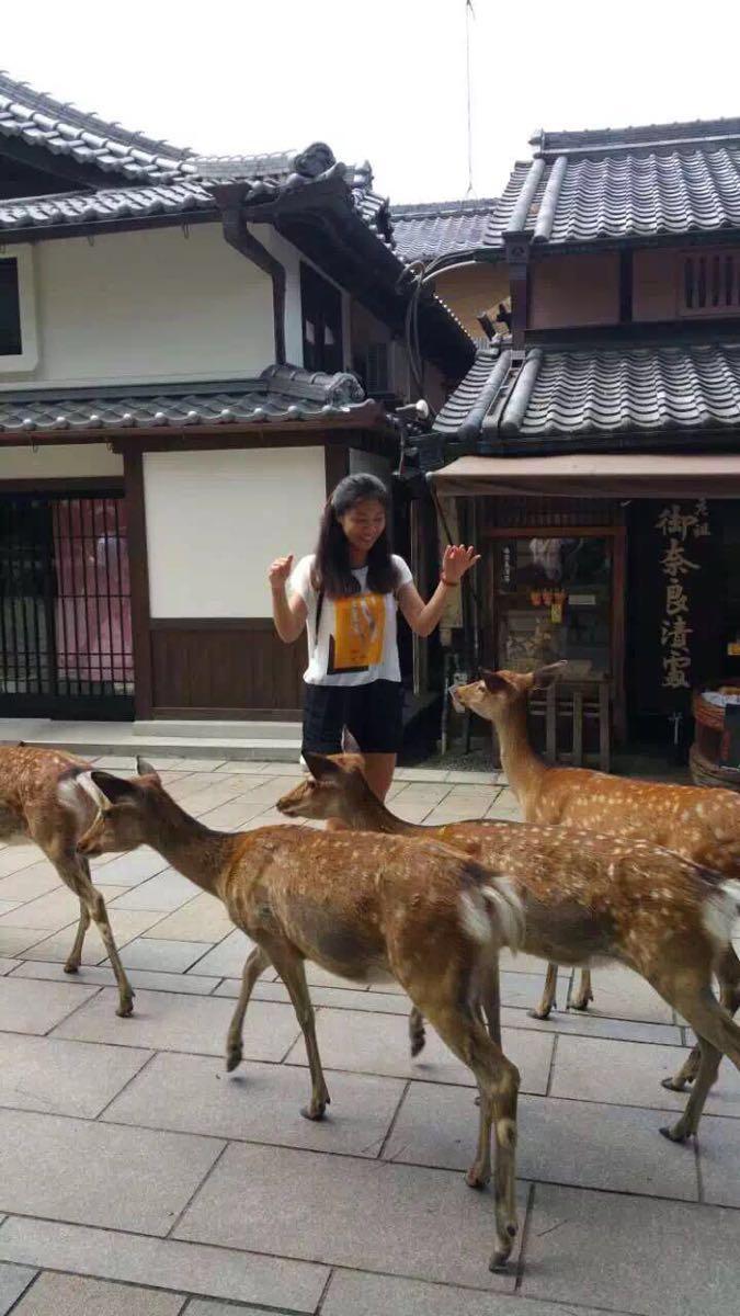 去奈良玩好多人应该都是奔着奈良公园的小鹿吧。整个公园都随处可见,据听说这些小鹿每次从游客手中吃到饼干后会点头以表示感谢,事实上的确是有看到这个行为,然而不晓得是不是再表示感谢,哈哈。虽然大多数小鹿头上的犄角已经去掉,特别友善,但亲们还是要注意,我有朋友就被撞的不轻哈.