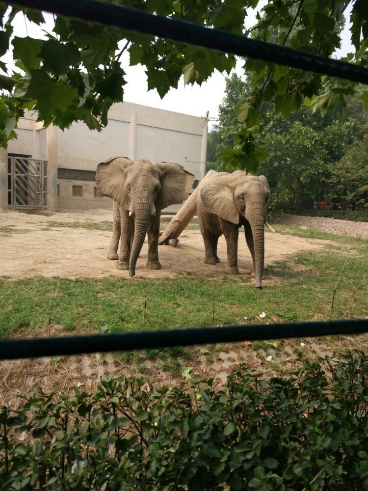 各种动物,门票便宜,比其他地方动物园实惠多了,北京最便民的地方.