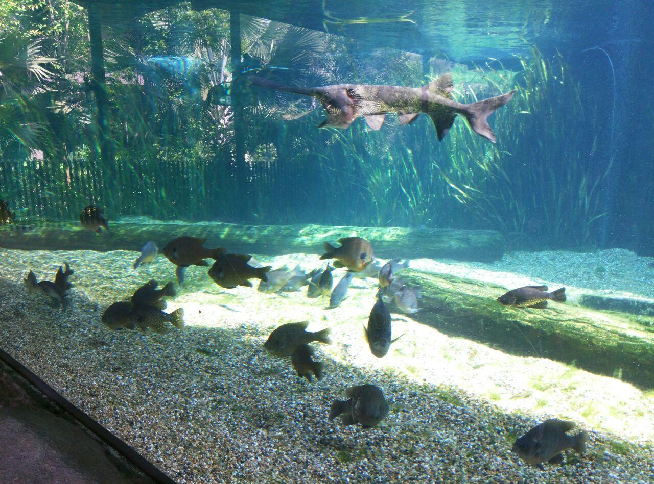 公园不大,自然环境很好,如果喜欢悠闲的走走坐坐看看,倒也是不错的选择。如果走得比较快,大概两个半小时可以了全部逛完(含亚马逊游船)。园内最精彩的是海牛和大水獭,其他动物园很难见到,尤其海牛池布置 设计 其他展示物种搭配都很赞。园内鱼等动物体型都非常大--即使是与其他动物园同物种相比,可见养得很好。票内自带游船比较无聊,不过也可以说比较休闲,在湖上转十五分钟,水面平静,船非常稳几乎感觉不到船动,但很晒,只能远观长颈鹿,没有其他动物可看。亚马逊船相对来说更好玩,会有类似激流勇进的小小的坡度下冲,但船速比较快,