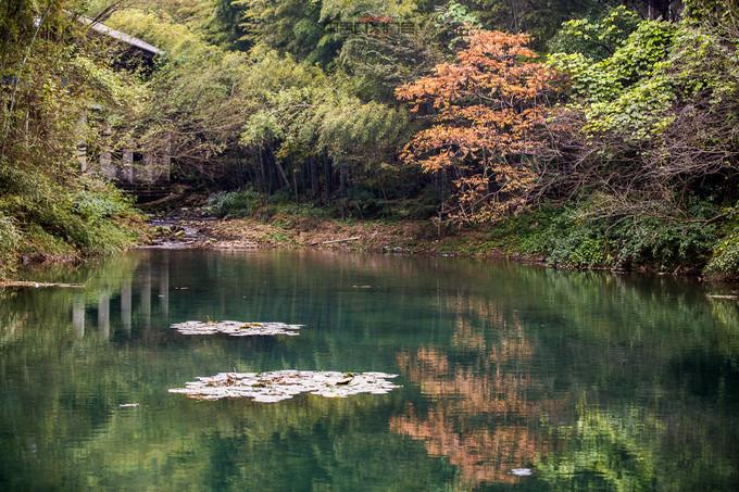 竹林小溪,竹海小径,这样的场景只有在梦中见过,而在眼前的却实实在在