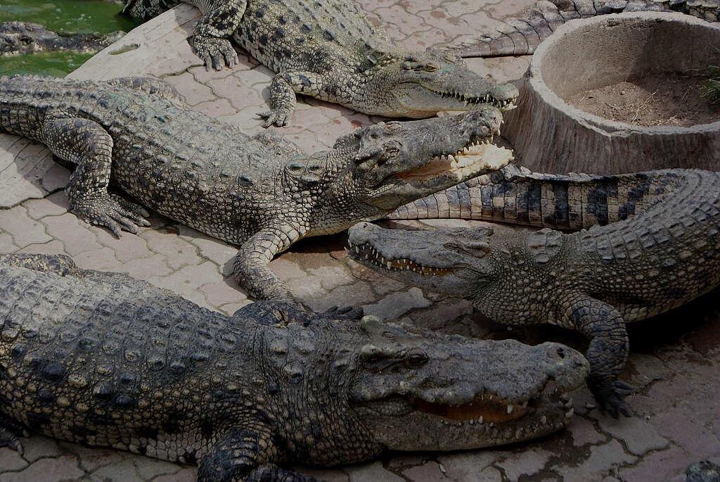 北榄鳄鱼湖动物园