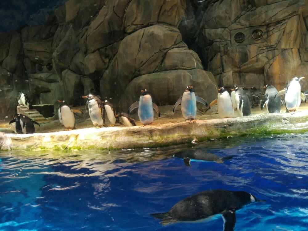 【携程攻略】香港海洋公园景点