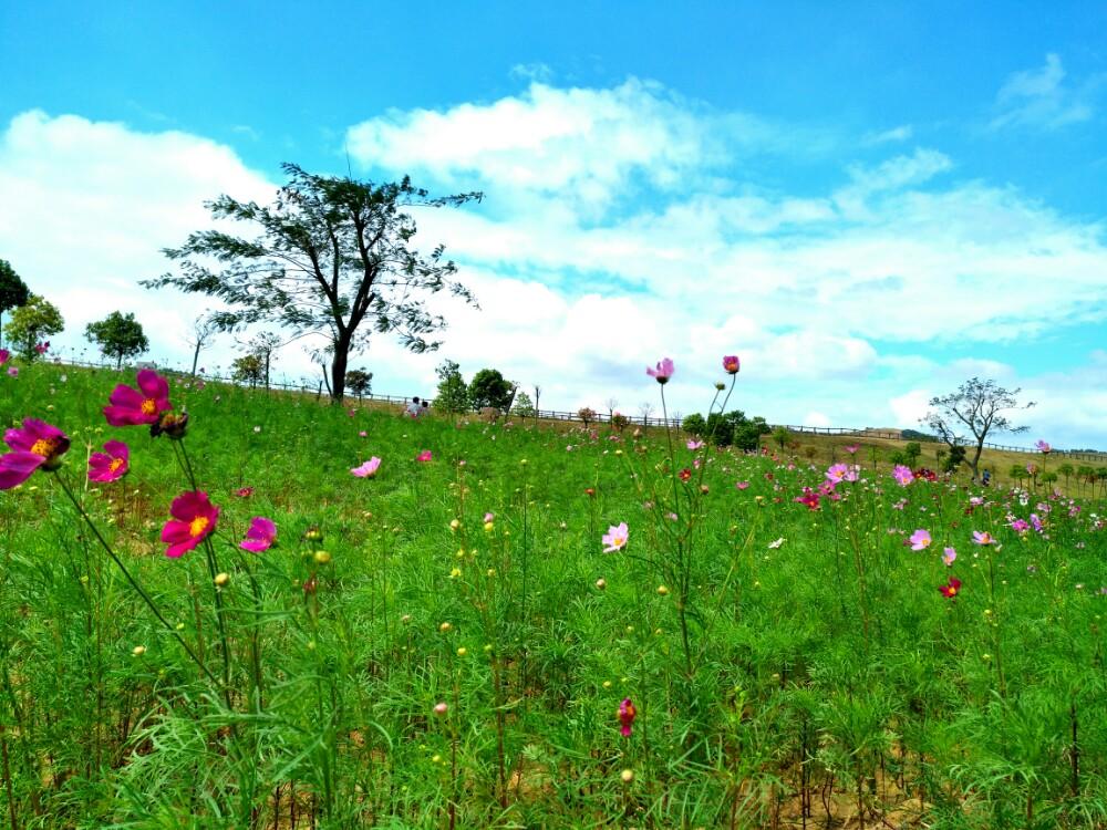 【携程攻略】湖北武汉木兰草原好玩吗