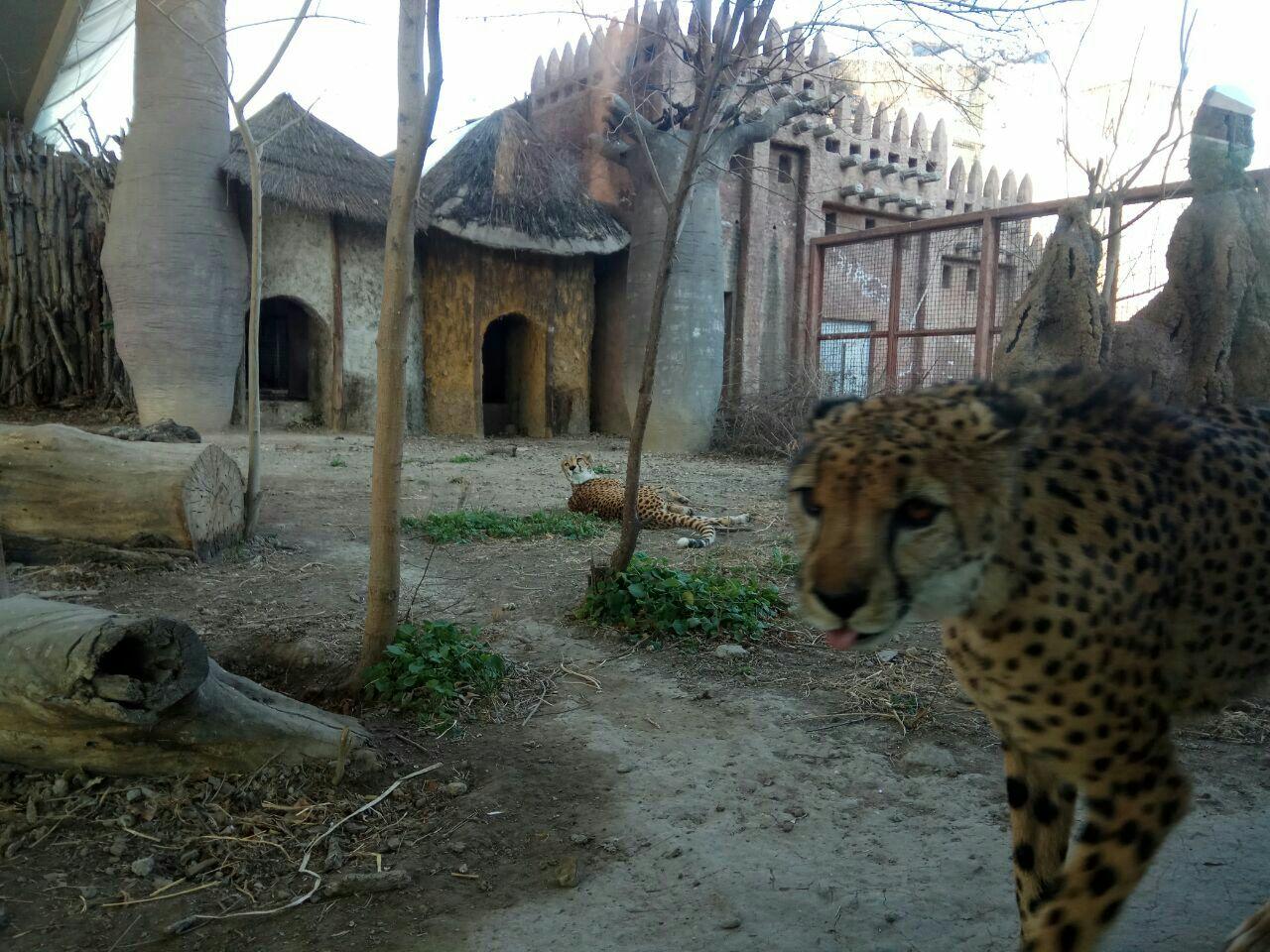 园子里动物很多,种类齐全.位于西直门外,市区繁华地段.