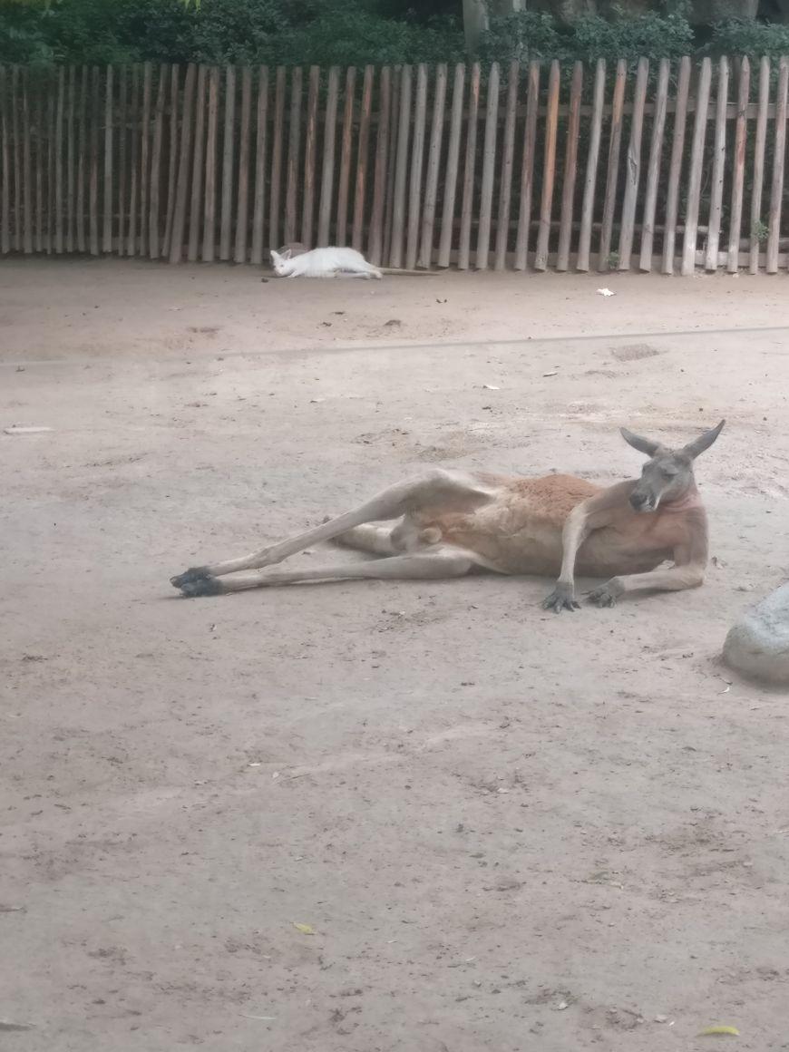 郑州动物园