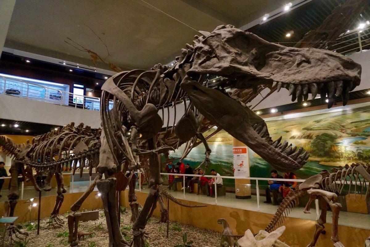 中国古生物馆_中国古动物博物馆门票15休闲娱乐拉手网郑