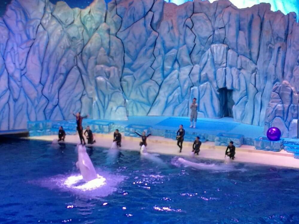 这里有各种大型海洋动物,水簇展馆有呆萌的小企鹅,稀有的白极熊