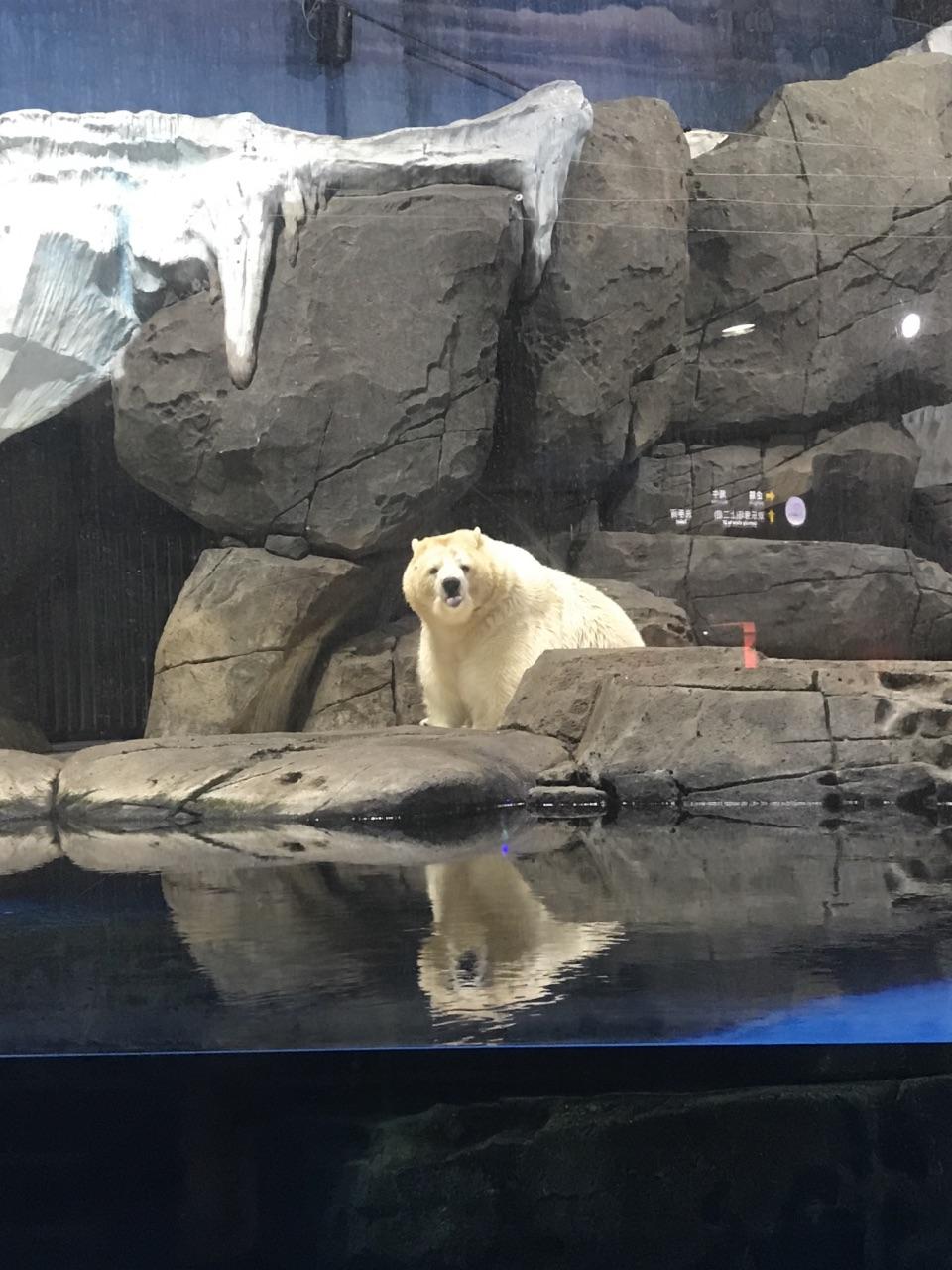 动物,极地,北极熊和北极狼等海象白鲸,还有一些天涯,鲨鱼,小乌龟,丽人江豚水母a动物小海龟图片