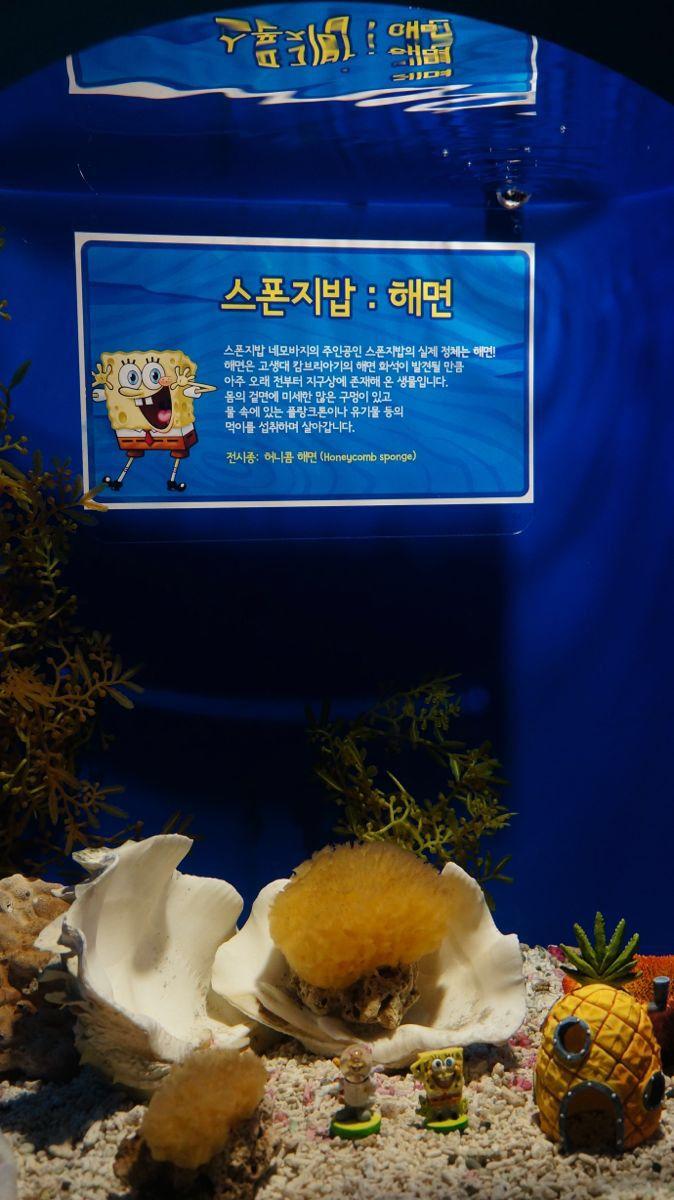 我们到达釜山水族馆时,正好遇见一队小孩子也来参观。釜山水族馆内有鸟类, 鱼类, 爬虫类, 两栖类等动物,是韩国国内规模最大的主体水族馆。水族馆共4层,地下3层地上1层。地上是露天公园和停车场,地下1层为海洋模拟馆、休息室;地下2、3层则是各类的水族馆。此外,地下1层的海洋模拟馆能让游客们在虚幻的海洋世界中尽情畅游。