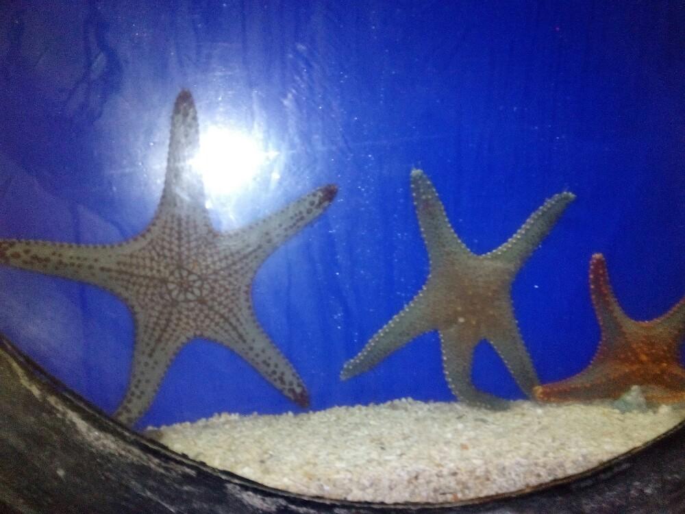 壁纸 动物 海底 海底世界 海洋馆 水族馆 鱼 鱼类 1000_750