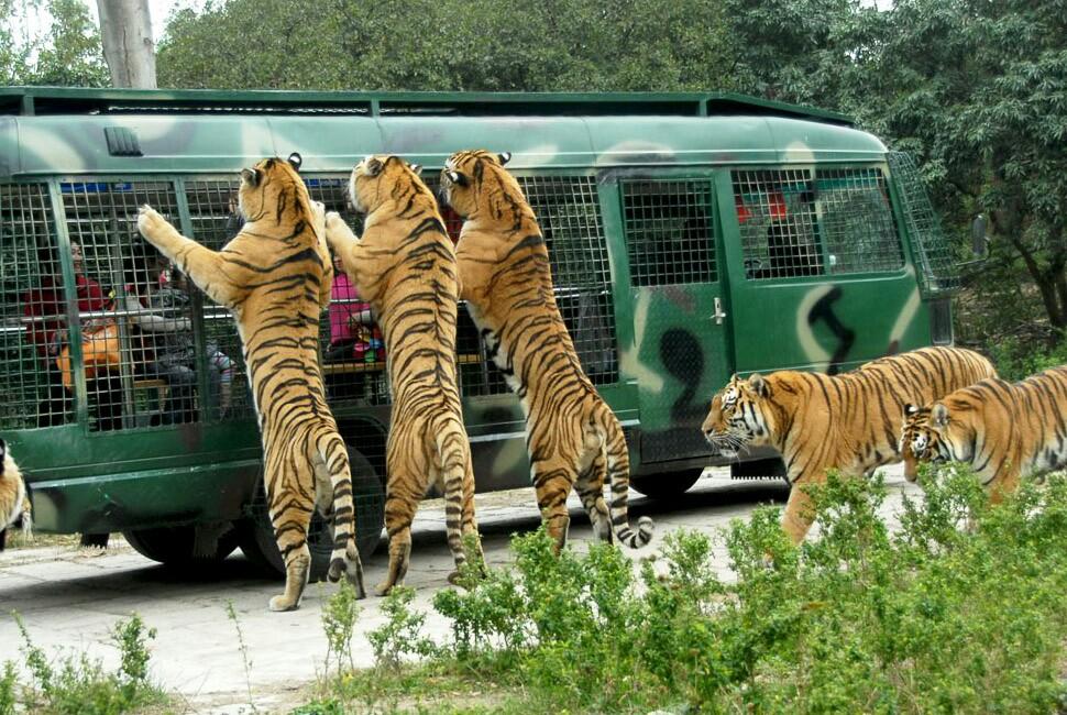 深圳西丽野生动物园_深圳野生动物园好玩吗?-深圳野生动物园好玩吗?