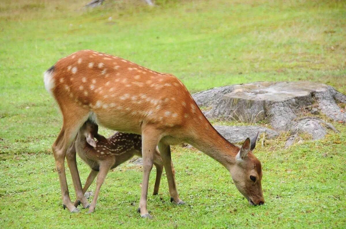发现动物公园景点组合