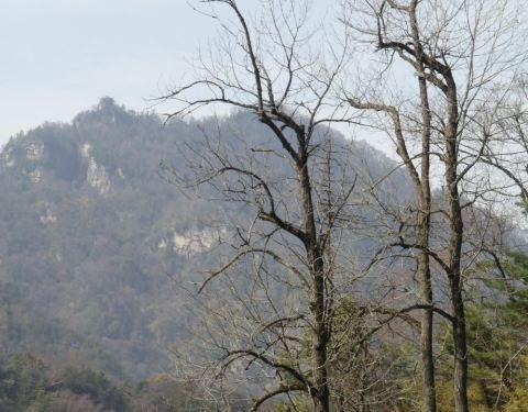 2019红河谷森林公园水晶,眉县红河谷森林公园保卫萝卜58萝卜第攻略门票关图片