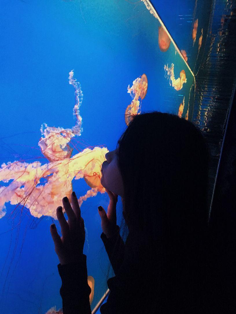是从动物园里面进去的,海洋馆的票价是120元,门票有点小贵。我是第一次来海洋馆,里面的鱼种类真是很多,而且每一个都有介绍,看完里面的海洋生物,你就会觉得真是大千世界,无奇不好,特别是一进去过小桥的时候,下面水里的鱼多的成群结队,真是壮观。里面的人也非常的多,好像大家也都是冲着海豚表演吧,表演非常精彩,还有海狮,一个个惊心动魄的画面,真是棒极了,就是没看够,呵呵。