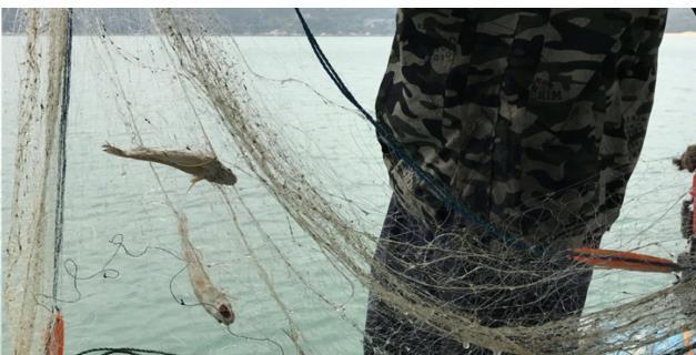 南澳岛休闲渔船之旅游攻略攻略出海一日游旅游景点游艇那个好图片