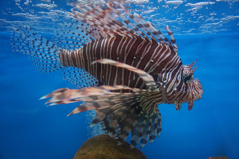 还有很多海洋动物的