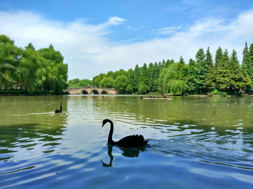 上海上海野生动物园好玩吗,上海上海野生动物园景点样
