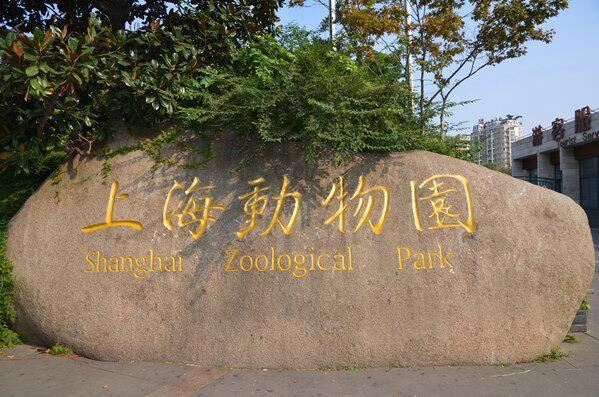 上海动物园位于上海市长宁区虹桥路2381号,紧邻上海虹桥国际机场。始建于1954年,原名西郊公园。上海动物园属于国家级大型动物园,占地面积74.3万平方米,饲养展出动物400余种,饲养展出动物的馆舍面积有47237平方米。是全国十佳动物园之一,中国第二大城市动物园。 上海动物园现有面积约74公顷,饲养展出各类稀有珍贵野生动物400余种6000多只(头)。其中有世界闻名的有着〝国宝〞和〝活化石〞之称的大熊猫,以及金丝猴、华南虎、扬子鳄等我国特产珍稀野生动物,还有世界各地的代表性动物如大猩猩、非洲狮、长颈鹿、