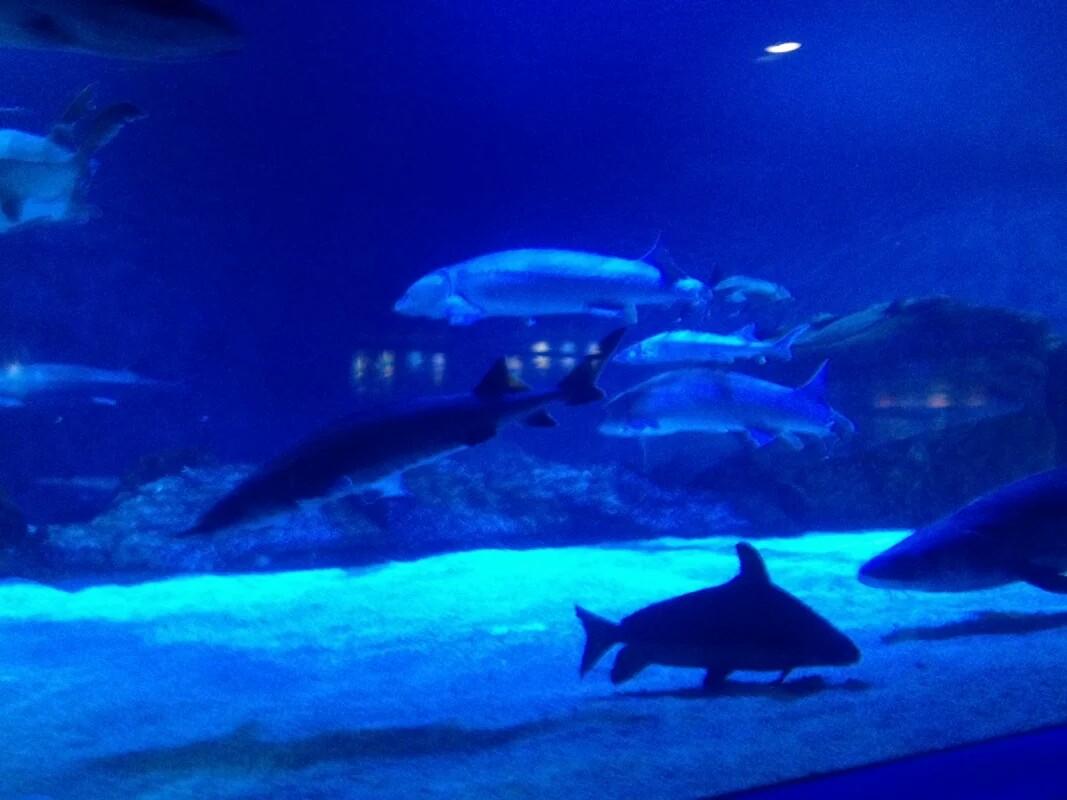 海洋馆离北京动物园有点近.里面还是水上表演.水上表演让我叹为观止.