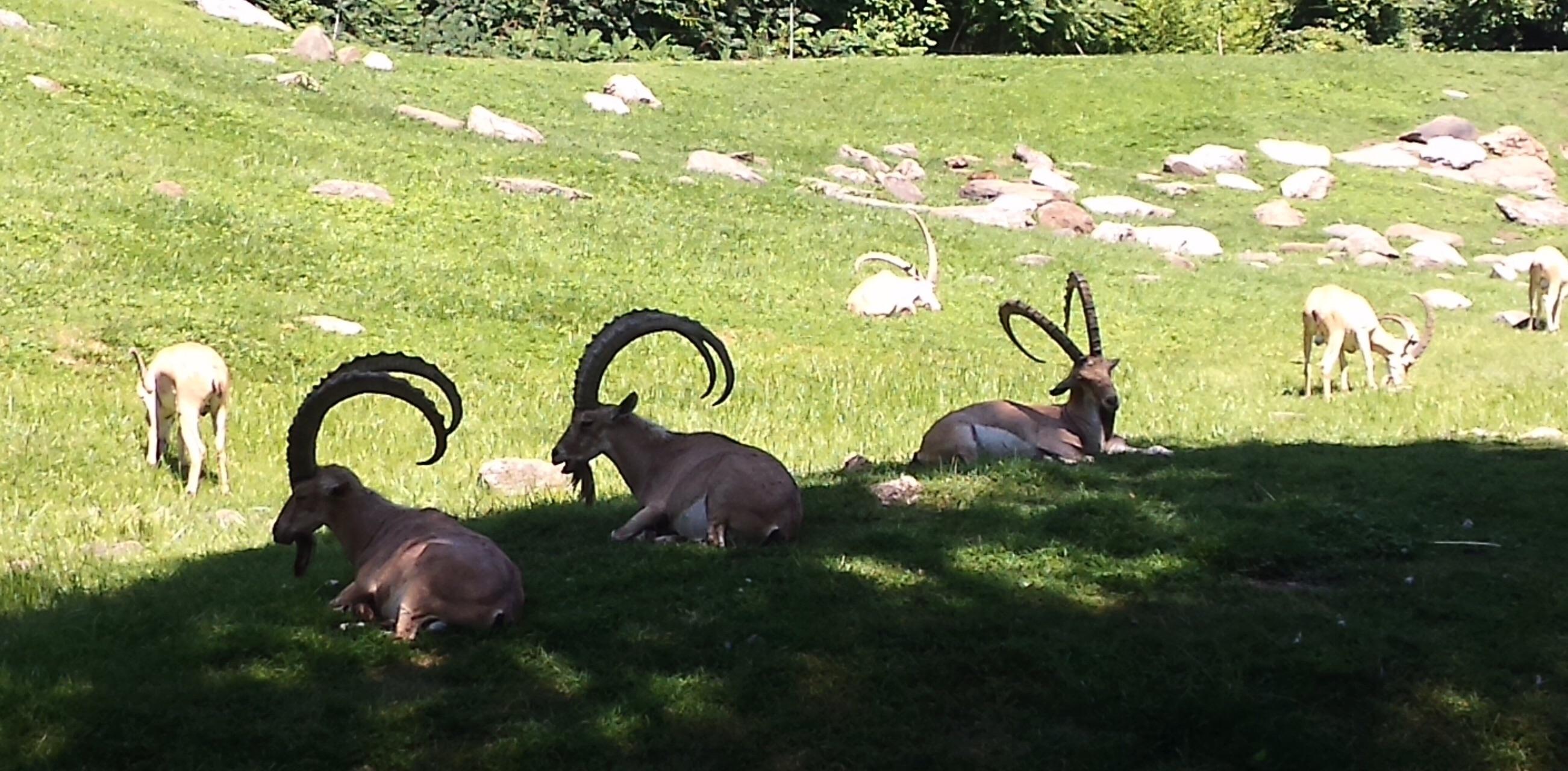 布朗克斯动物园旅游景点攻略图