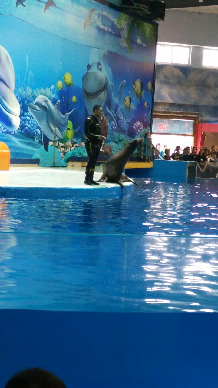 大乌龟,鲨鱼,企鹅,海狮,海豚……好多好多海底世界的各种动物特别兴奋