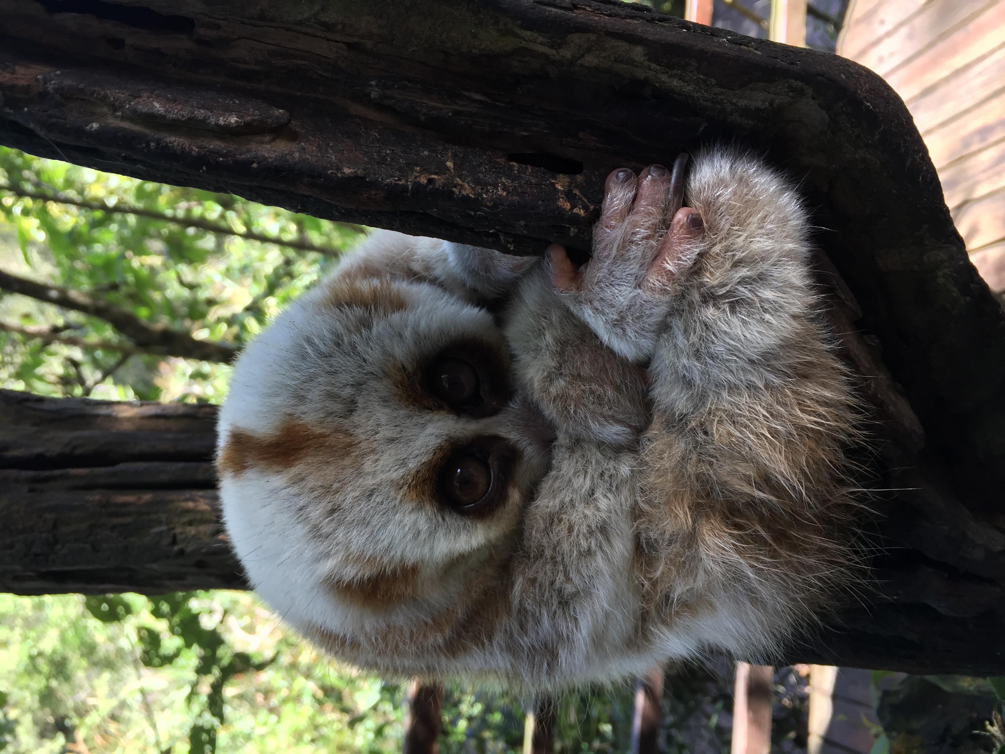 这个季节的小动物是否冬眠