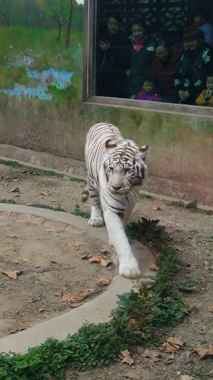 园内的动物基本都看完了,里面还有儿童游乐场,小朋友的最爱,值得去看.