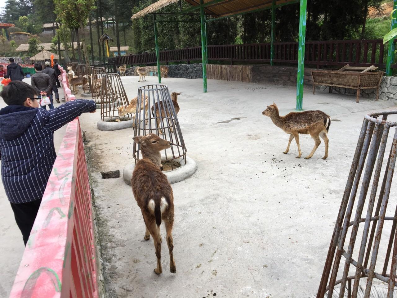 贵阳贵州森林野生动物园好玩吗,贵阳贵州森林野生动物