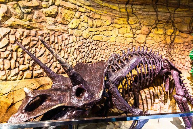与恐龙相伴而生的动物,植物也各自上演着它们的演化传奇.