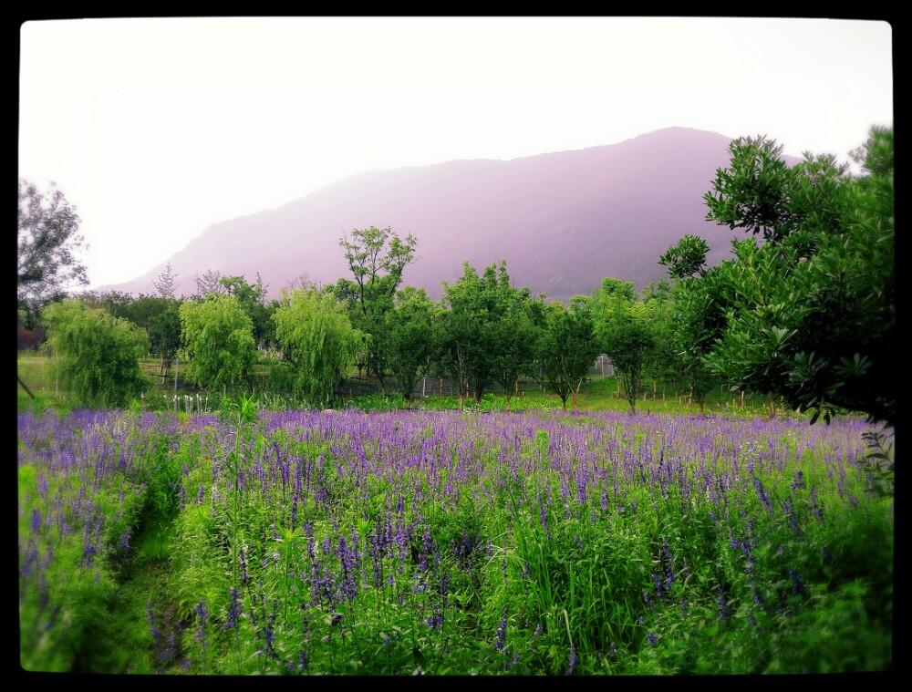 大阳山植物园景区