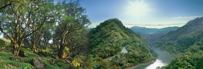 香榧森林公园图片