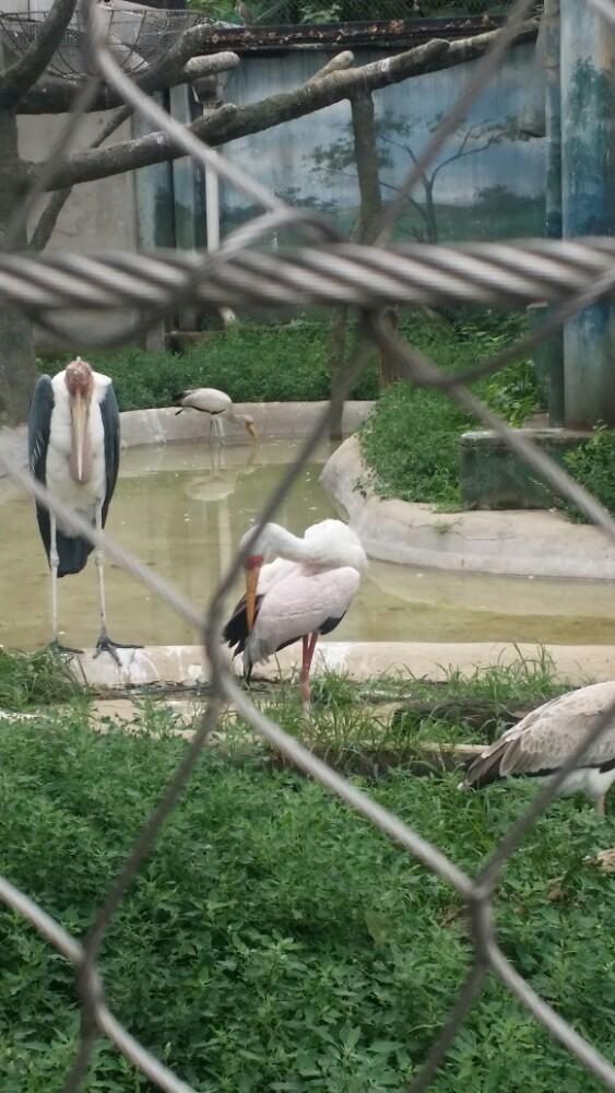 走近动物园就能看见光绪年间的大门。这些表明了动物园经历过的历史。对于80.90后来说动物园的记忆还停留在儿时。小时候去北京必定会去动物园,那时候很多城市还没有动物园,那种兴奋,直到现在我还记忆犹新。每个人游园的心境不同,陪孩子也好,陪女友也罢。一进园走在两旁都是参天大树的小路上好像已和外面熙熙攘攘的人群隔离,倒是多了一份宁静! 动物园的树很多,不用担心太热,而且绿化很好。但是4月份的春天有了一个问题!就是杨树柳树有飘絮现在,所以支气管不好的最好不要去,或着戴口罩。动物园正门口有租儿童推车的需要下午3点归还