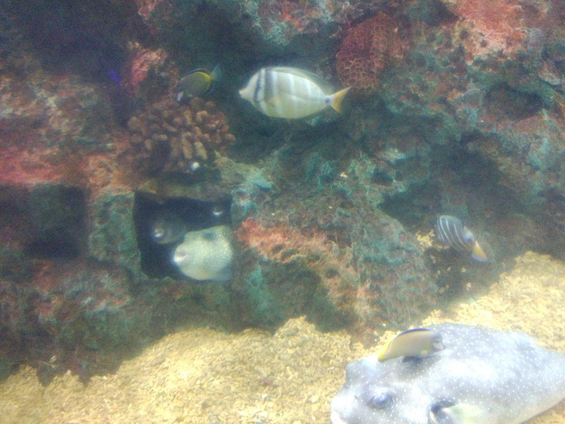 背景 壁纸 海底 海底世界 海洋馆 皮肤 水族馆 星空 宇宙 桌面 1152_8