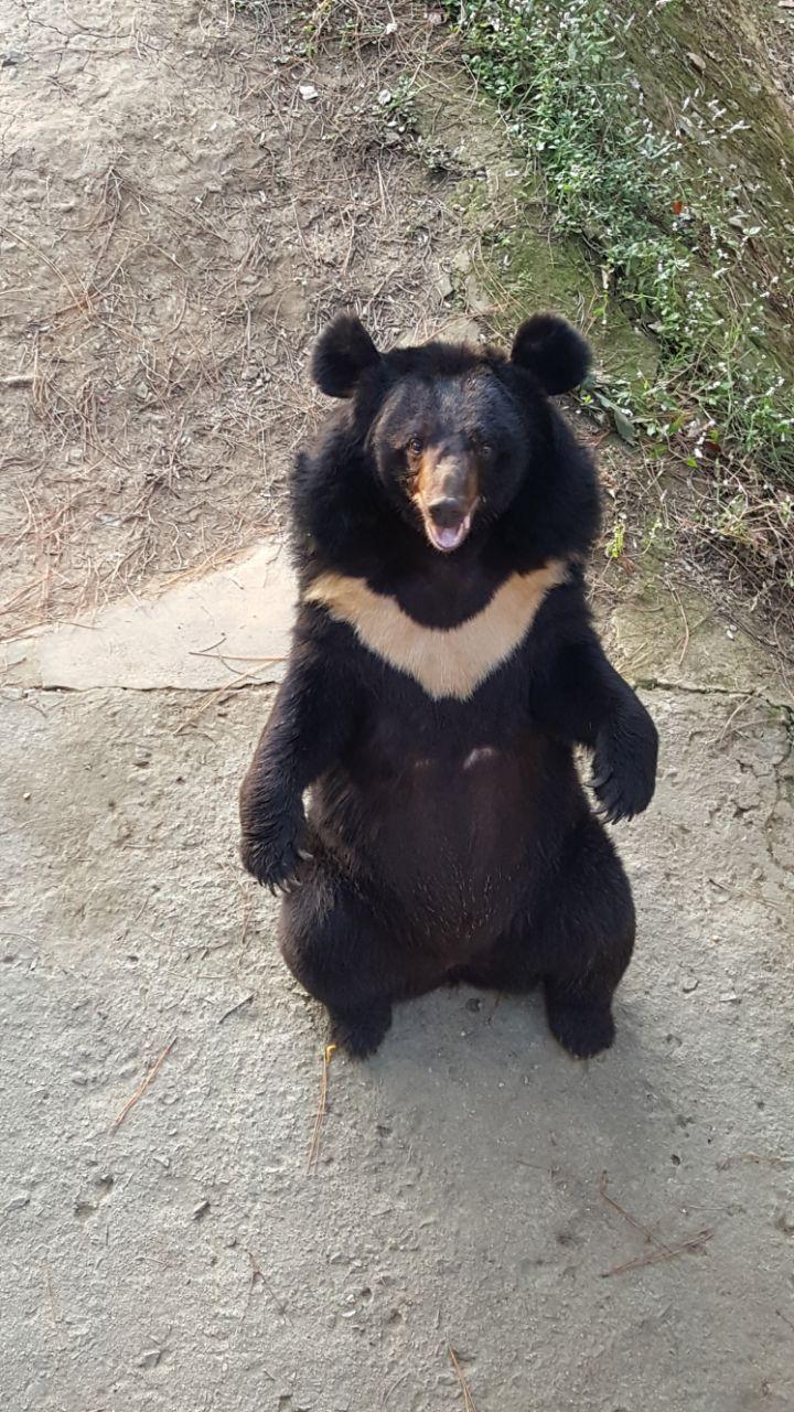 【携程攻略】武汉九峰森林动物园好玩吗,武汉九峰森林
