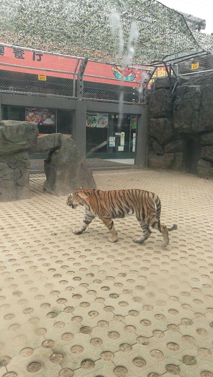 深圳野生动物园旅游景点攻路线秦岭一日游攻略略图图片