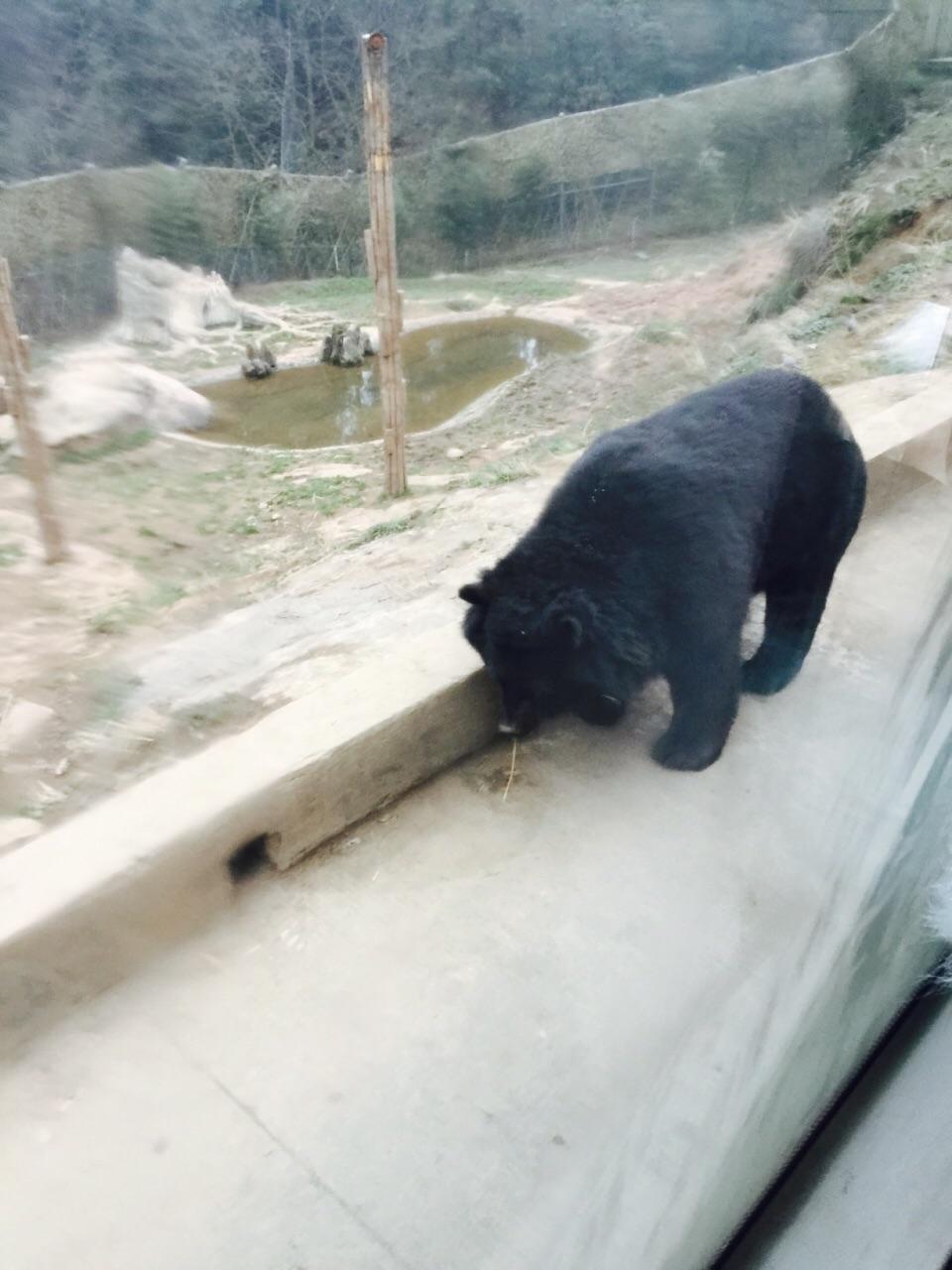 野生动物乐园小朋友还是比较喜欢的,里面有鹦鹉,黑熊,老虎,狮子,大象