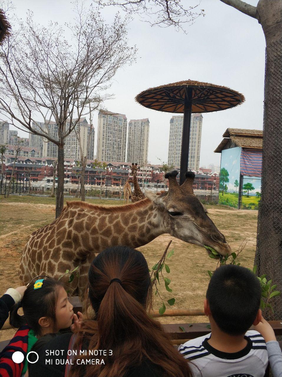 动物园很好玩,马戏团表演很好看!很开心! 2018-02-21有用 ( 0)