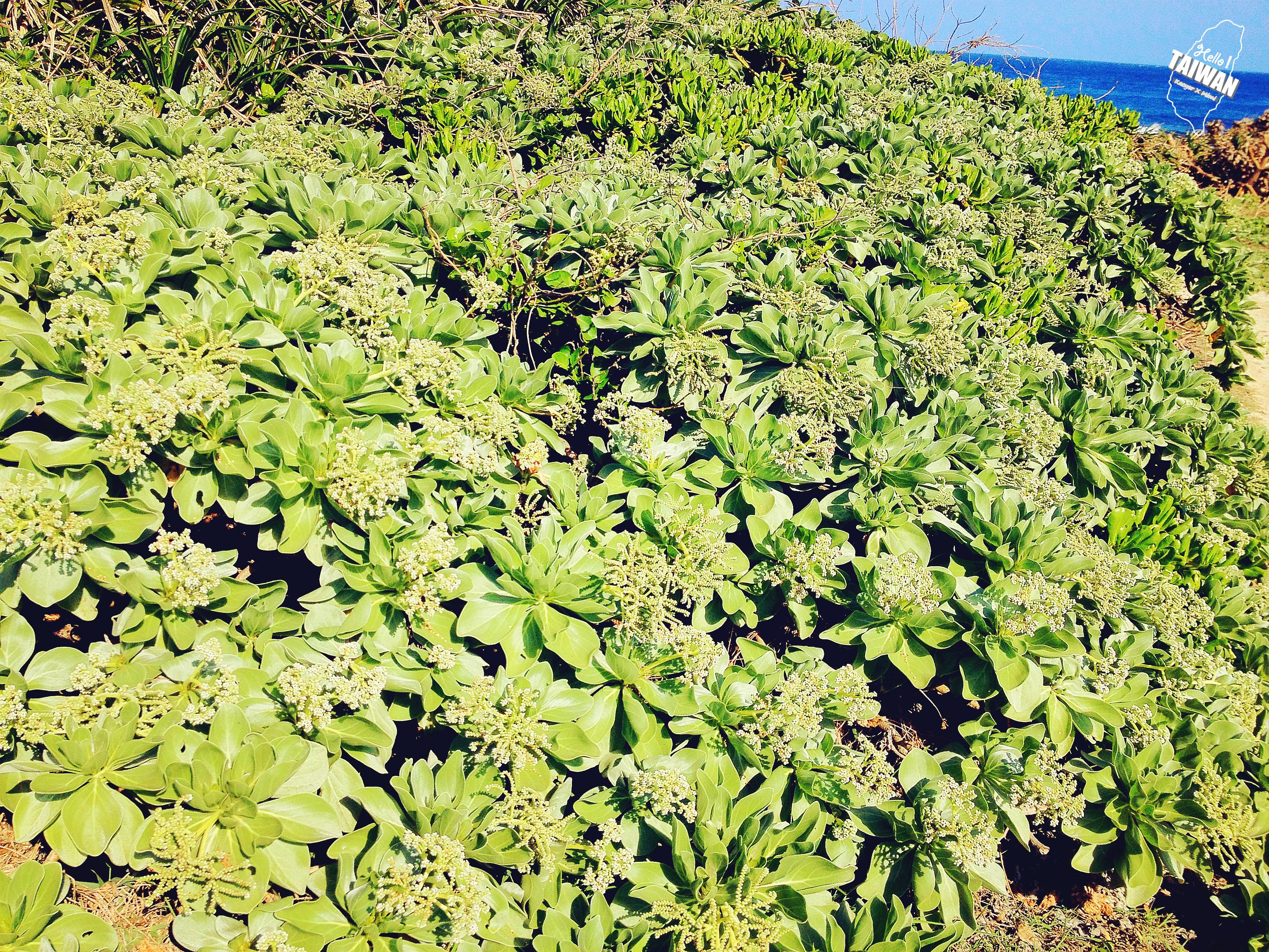 壁纸 成片种植 风景 植物 种植基地 桌面 3264_2448