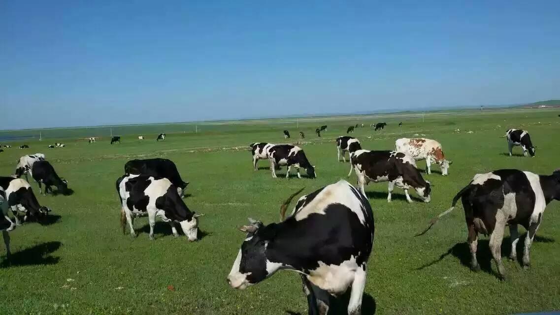 壁纸 草原 动物 牛 桌面 1137_640