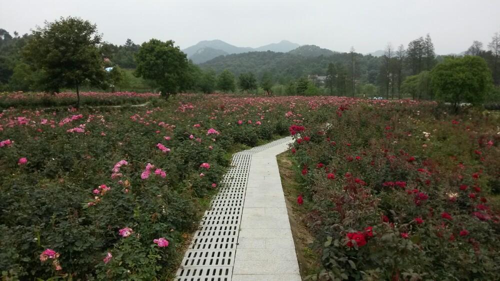 【携程攻略】湖北武汉木兰玫瑰园好玩吗