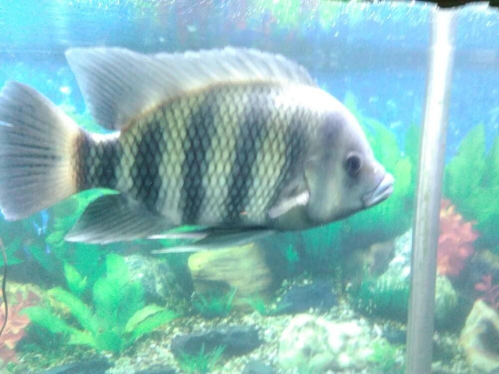 壁纸 动物 鱼 鱼类 1000_750