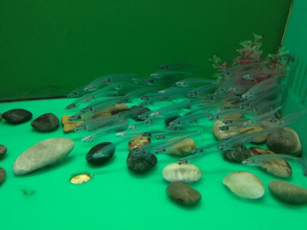 对于海底世界的向往,则是来源于那句没看过海底世界,别说你到过青岛。这句话太深入人心了。周末跟老公一起带着爸爸妈妈过来的,对于老人购票有优惠,比较划算。景区不管是地理位置还是环境都很好,景区包含梦幻水母宫、新海洋生物馆、海兽馆、新淡水生物馆、新鲸馆、海底世界、海洋科技馆七大展馆,可以说是集海洋旅游观光和科普教育于一体的观光基地。也算是全国唯一的依山傍海、山中有海的全部在地下的海洋馆。全程逛了差不多4个小时,该去的馆基本上都去了,顺便还去了第一海水浴场跟八大关,爸妈都很开心,以后有机会还会再来